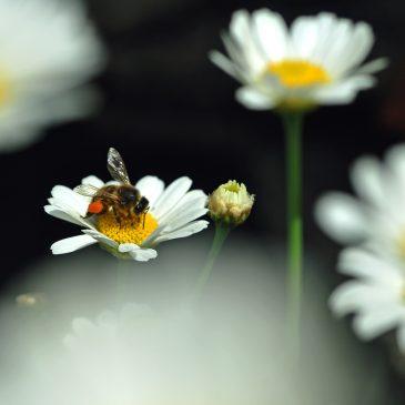 Tussen bloemen en kriebelbeestjes