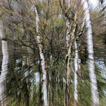 Abstract in de natuur
