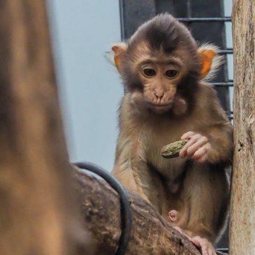 Themagroep Dierentuinfotografie naar Burger's Zoo in Arnhem