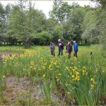 Macro-Natuur themagroep zoekt uitsluipende libellen