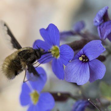 NatuurMacroGroep 1 naar Botanische Tuin 'Uithof'