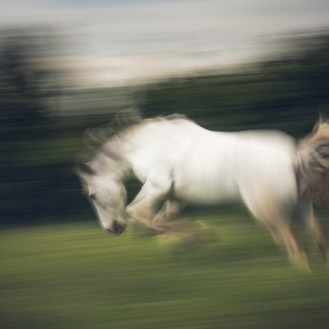 ICM met paarden