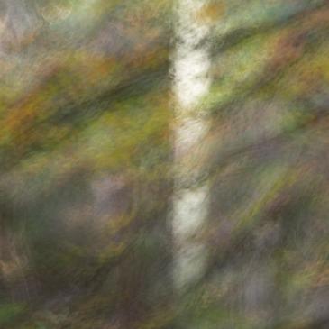 """Themagroep ICM naar de """"dansende bomen"""""""